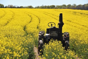 field-of-rapeseeds-1382772_960_720.jpg